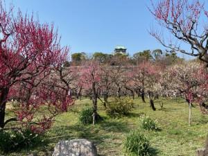 梅林と大阪城